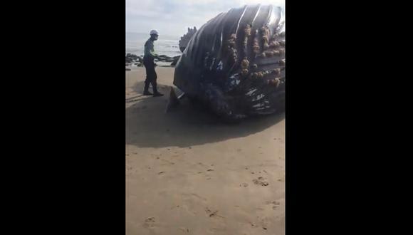 Pobladores intentaron devolver al mar a ballena varada en Punta Sal. (Foto: Captura de pantalla)