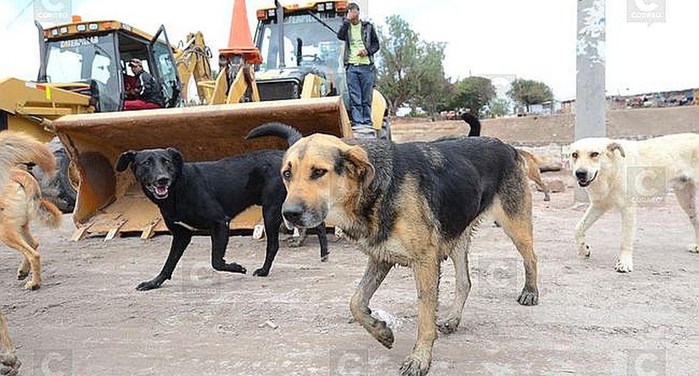 Vecinos de Paucarpata sólo pueden tener dos canes en sus viviendas
