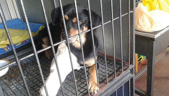 Colecta pública para alimentar animales de albergues en Arequipa