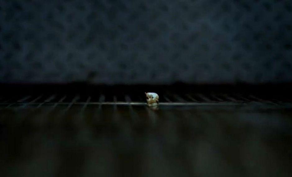 Facebook: realizarán peculiar carrera de caracoles en Lima