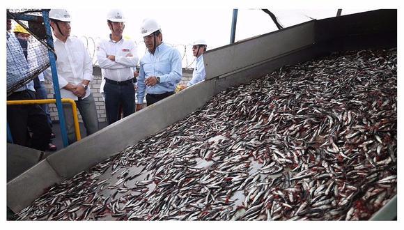 Destacan cuota de anchoveta para consumo humano directo