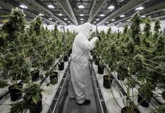 Colombia autorizó la exportación de cannabis: uso medicinal y productos derivados