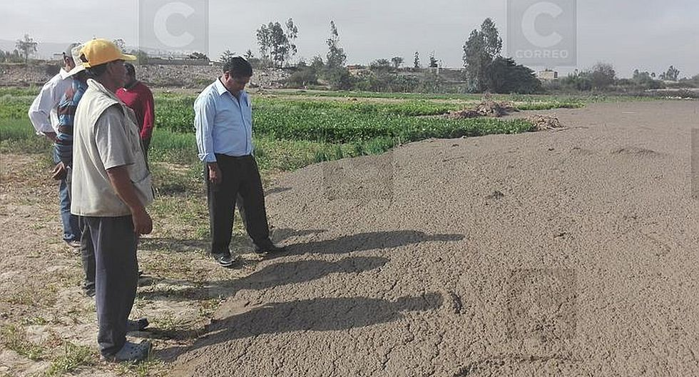 Huaico afectó a 60 agricultores en Calana y Pocollay